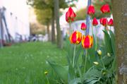 ../galleries/2016.04.16_Mehr_Fruehling/DSC_4655.thumbnail.jpg