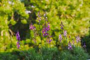 ../galleries/2019.06.07_Balkonblumen/DSC_1283.thumbnail.jpg