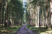 ../galleries/2020.04.04_Wandern_Harz_Bad_Grund/DSC_4757.thumbnail.jpg