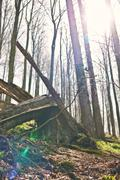../galleries/2020.04.10_Wandern_Harz_Bad_Sachsa/DSC_4868.thumbnail.jpg