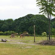 ../galleries/2020.06.03_Opel_Zoo_Kronberg/DSC_5376.thumbnail.jpg
