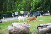 ../galleries/2020.06.03_Opel_Zoo_Kronberg/DSC_5393.thumbnail.jpg