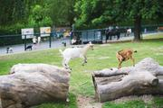 ../galleries/2020.06.03_Opel_Zoo_Kronberg/DSC_5402.thumbnail.jpg