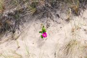 ../galleries/2020.06.27_Urlaub_Amrum_-_Tag_9/DSC_6706.thumbnail.jpg
